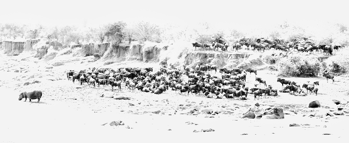 wildebeest-1-hippo-high-key-high-stucture-bw-silv-ef-pro-_y5o1656-mobile-tented-camp-mara-river-serengeti-tanzania