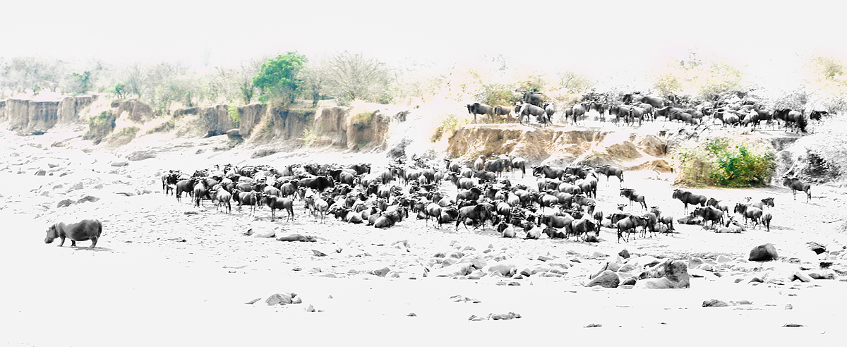 wildebeest-1-hippo-high-key-high-stucture-bw-silv-ef-pro-green-revealed-_y5o1656-mobile-tented-camp-mara-river-serengeti-tanzania