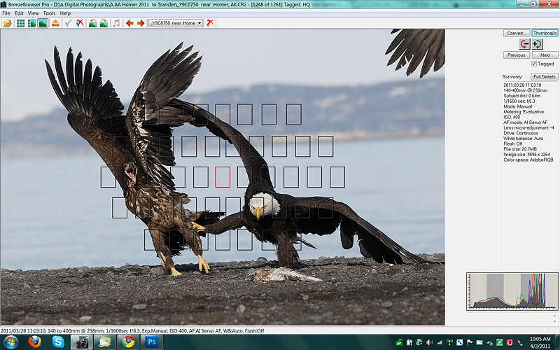 bald-eagle-squabble-brbr-main-view