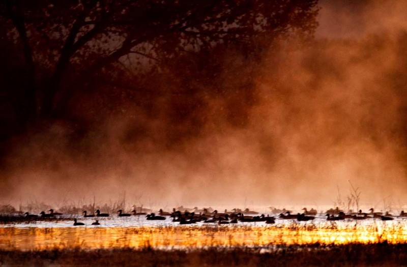 ducks-in-mist-1-6-sec-at-iso-4000-_y9c1180-bosque-del-apache-nwr-san-antonio-nm