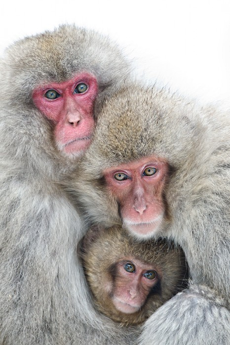 snow-monkey-family-_y9c4195-jigokudani-yaenkoen-naganoprefecture-japan