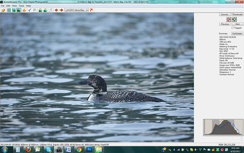 histgogram-common-loon