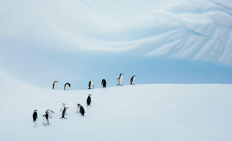 chinstrap-penguin-group-on-blue-iceberg-_b2e8650-coronation-island-south-orkney-islands_1