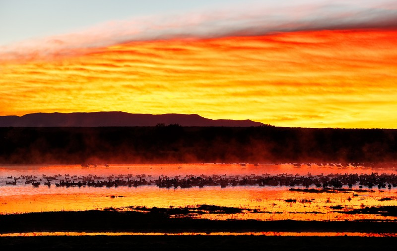 snow-geese-at-sunrise-_09u0049-bosque-del-apache-nwr-san-antonio-nm