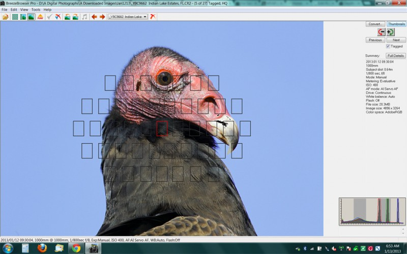 turkey-vulture-brbr-scr-cap