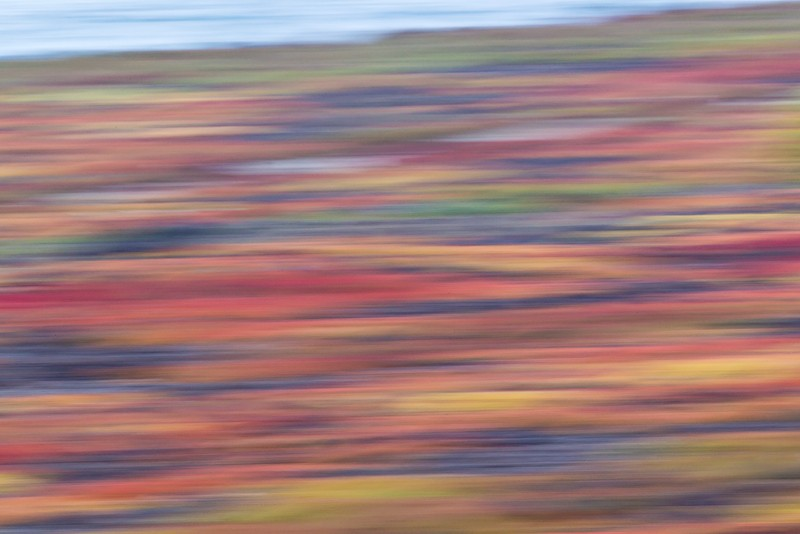 vegetation-panning-blur-_w3c9067-south-plaza-island-galapagos