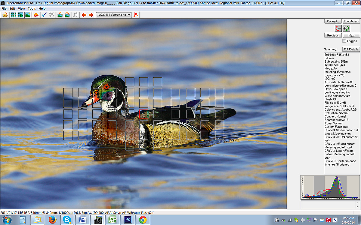 brbr-scrn-capture-wood-duck