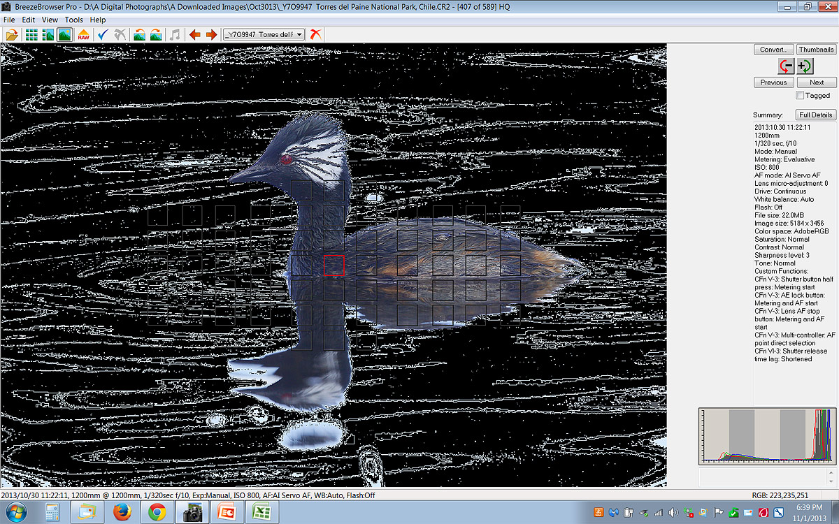 brbr-grebe-scr-capture