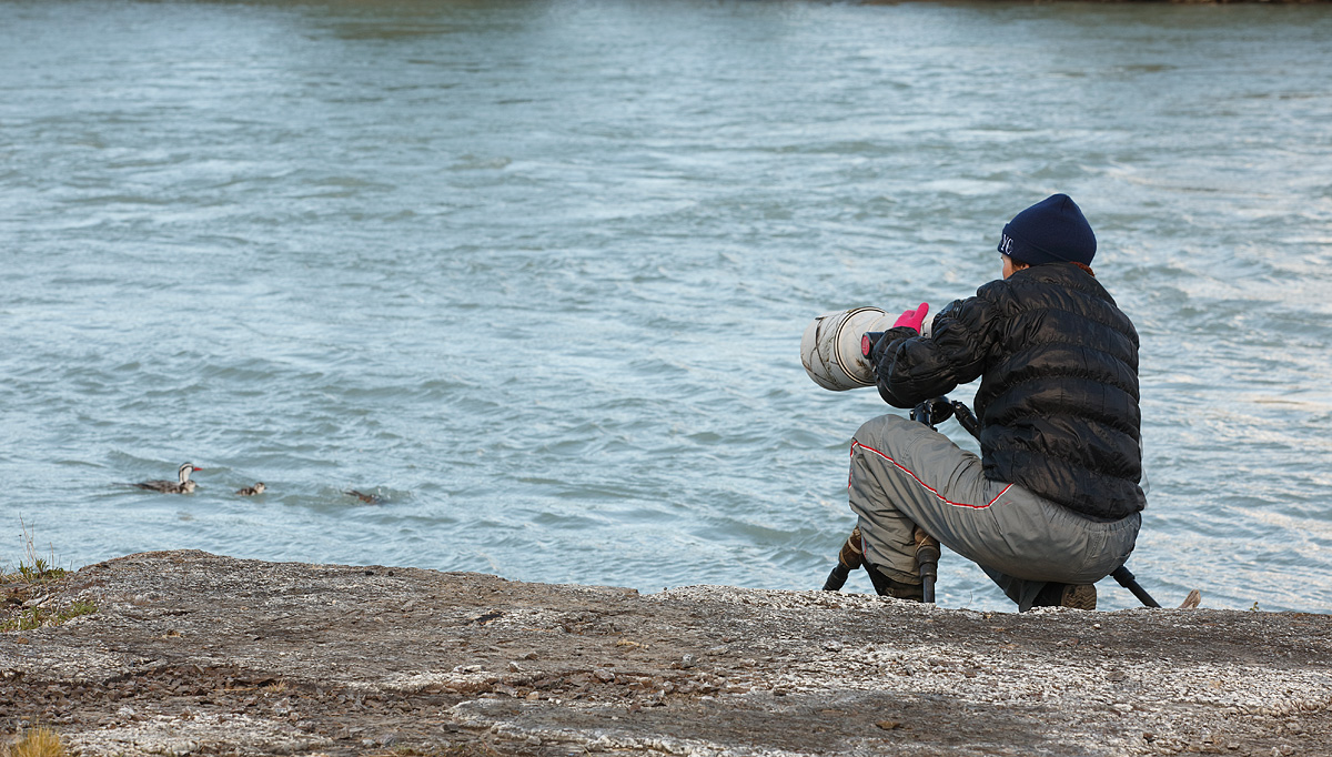 denise-ippolito-with-torrent-duck-family-at-point-blank-range-_a1c8744-torres-del-paine-national-park-chile