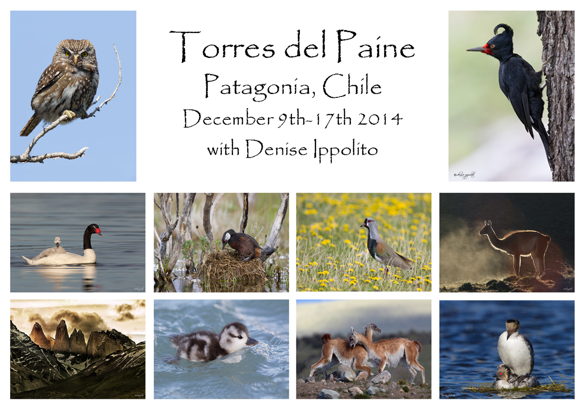 denise-torres-dale-paine-card
