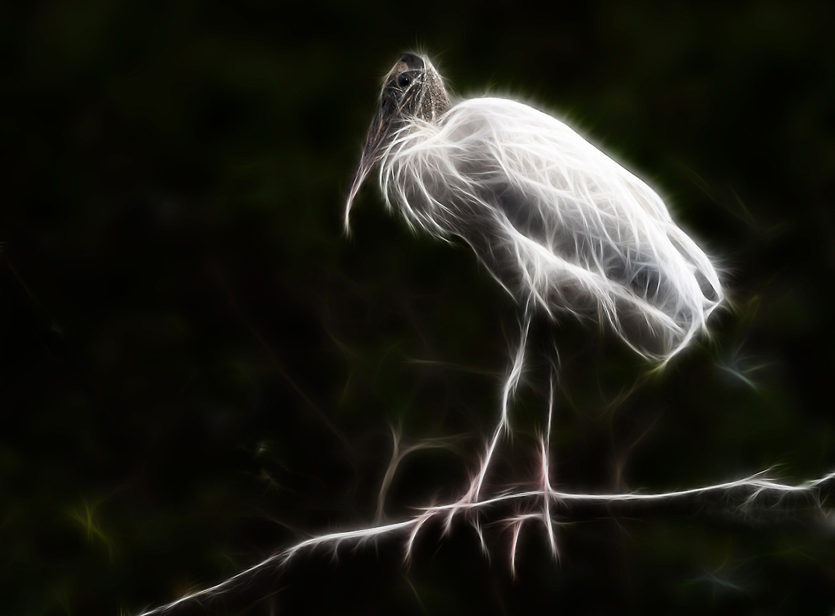 digital_don-poulton-wood-stork-2