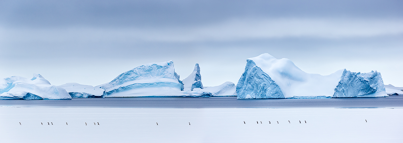 small_clemens-vanderwerf-march-of-the-penguins_stiched-pano_e7t6755-lemaire-channel-gerlache-strait-antarctica