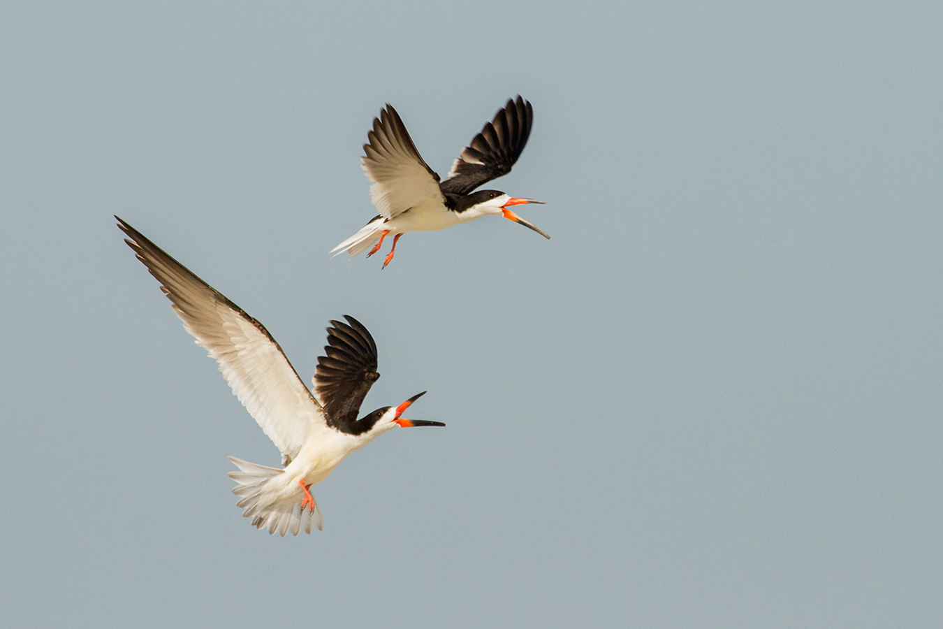 youth_courtney-moore-black-skimmer-new-jersey