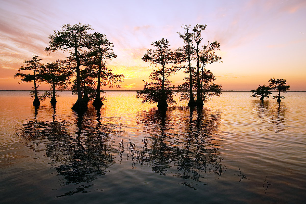 cypress-trees-at-sunset-_a1c2838-lake-blue-cyrpess-indian-river-county-fl
