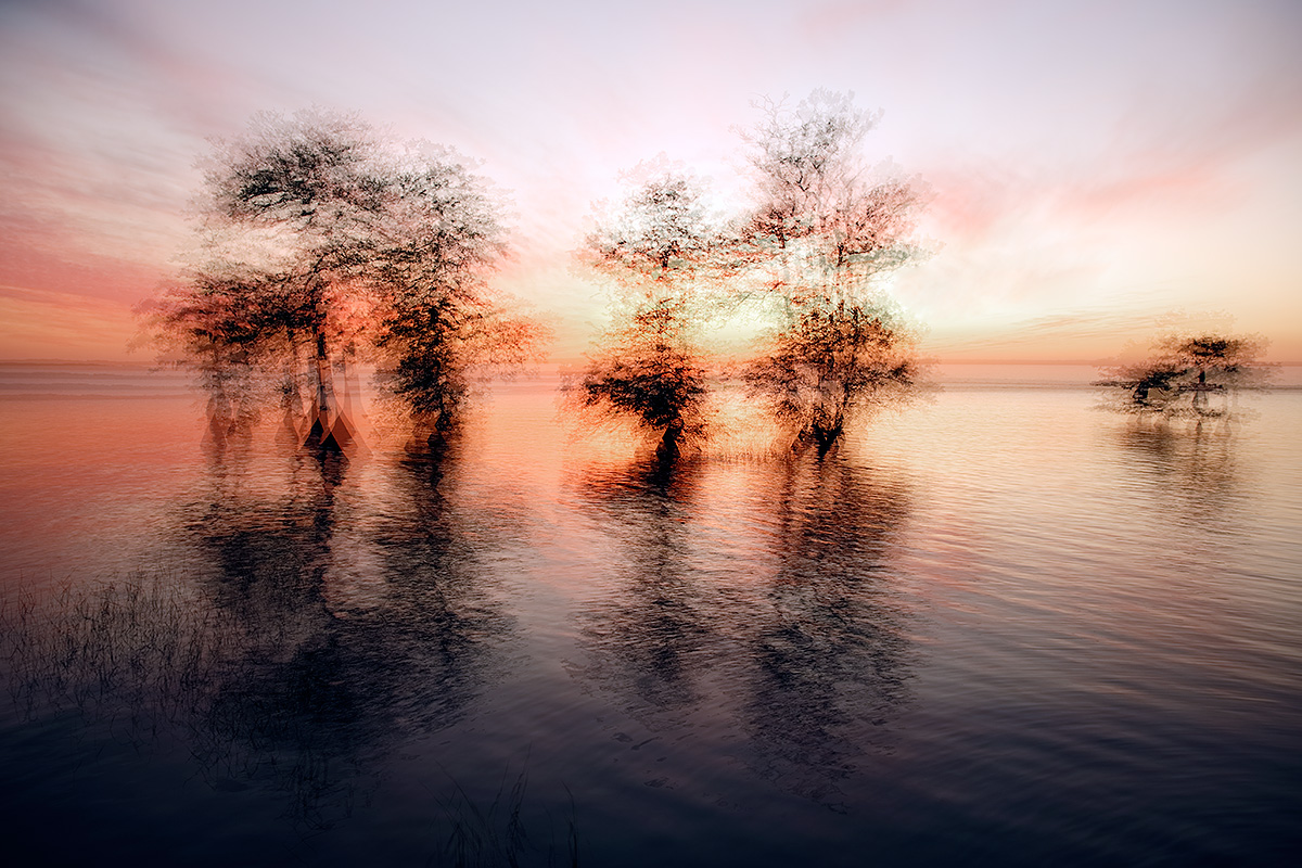 cypress-trees-mutliple-exposure-_a1c2879-lake-blue-cypress-indian-river-county-fl