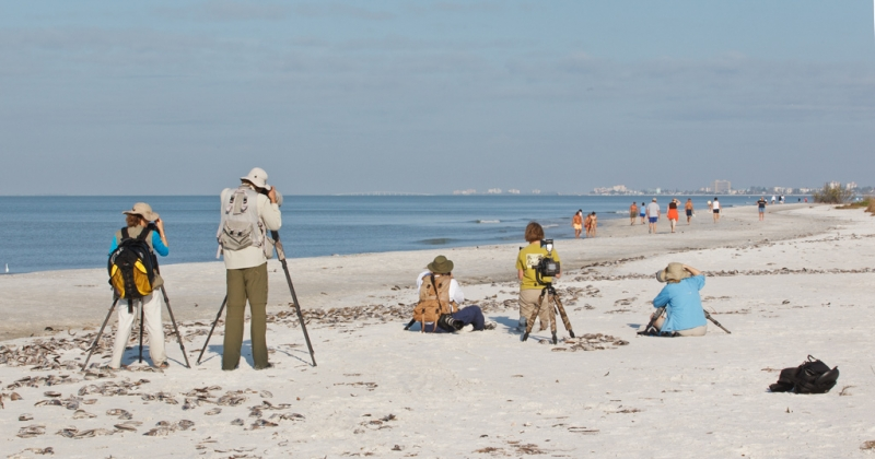 baa-ipt-group-photographing-wilsons-plovers-bpn-_90z1517-little-estero-lagoon-fort-myers-beach-fl
