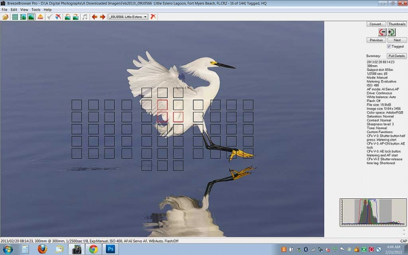 snowy-egret-stretching-to-land-screen-capt