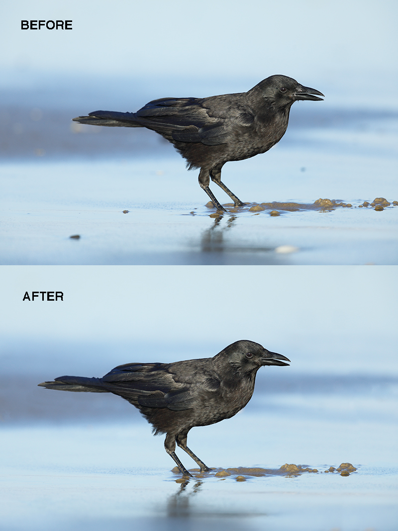 The New BAA Photoshop Tutorial MP4 Crow Clean-up Video  And