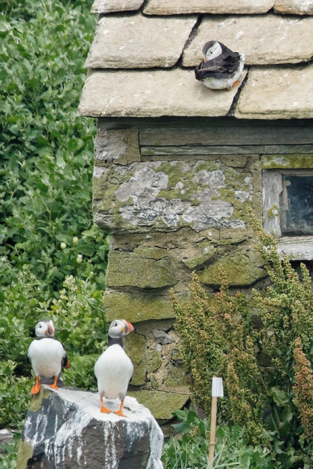 100-pct-Puffin-Hotel-_W5A3151-islands-off-Seahouses,-UK