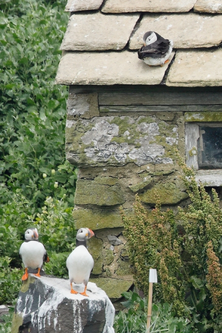 100-pct-from-tiff_W5A3151-islands-off-Seahouses,-UK