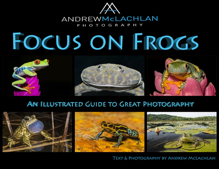 Focus-on-Frogs-COVER