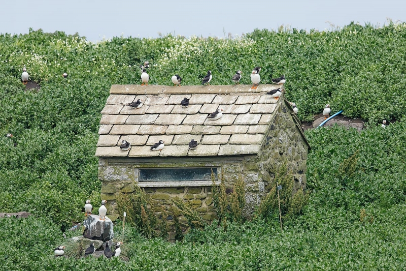 Puffin-Hotel-_W5A3151-islands-off-Seahouses,-UK