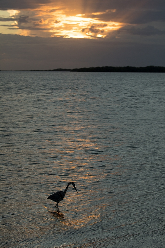 RAW-file-GBH-SUNSET-_P3A3171-Fort-DeSoto-Park,-Pinellas-County,-FL