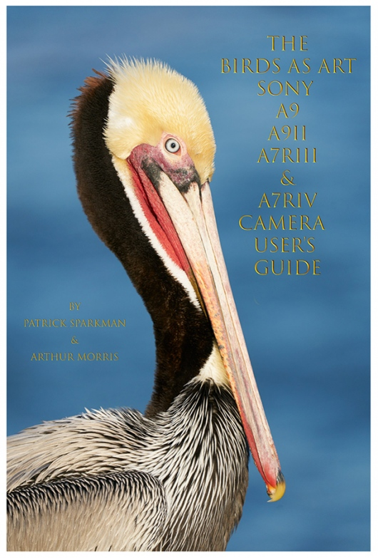 SONY-e-Guide-cover