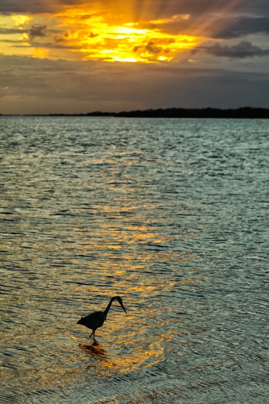 anthony-ardito-_P3A3171-Fort-DeSoto-Park,-Pinellas-County,-FL-Master-copy