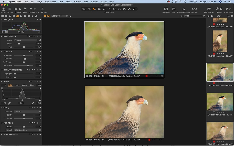 caracara-side-by-side