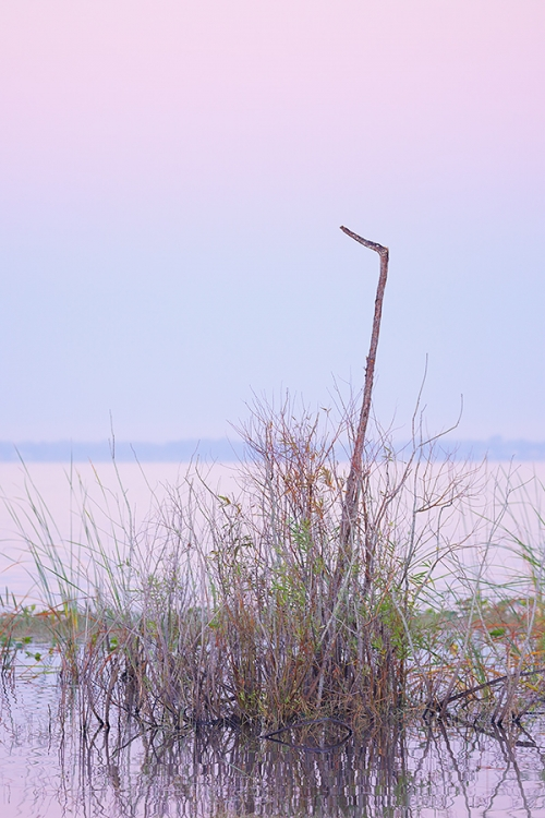 the-perch-in-pink-purple-blue-pre-dawn