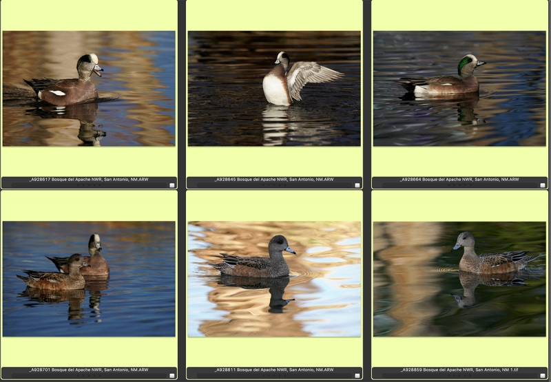 wigeon-composite