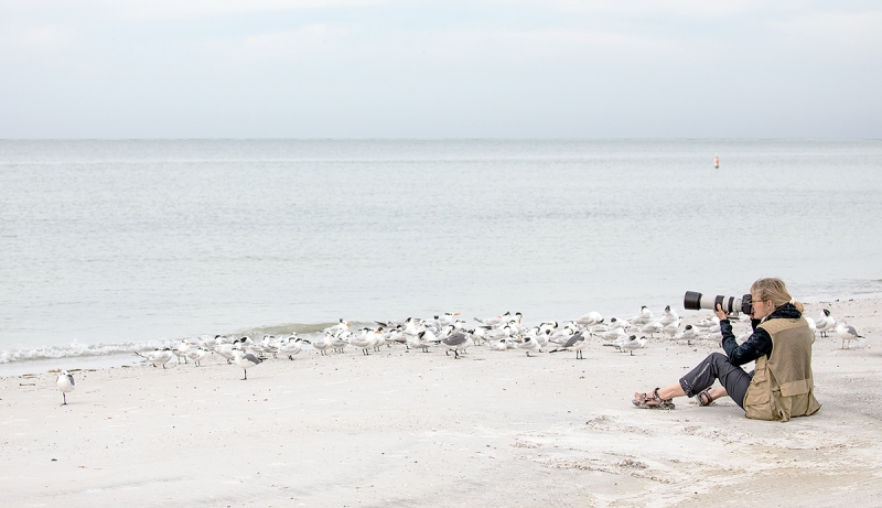 woman-photographing-tern-and-gull-flock-_P3A8780--Fort-DeSoto-Park,-Pinellas-County,-FL