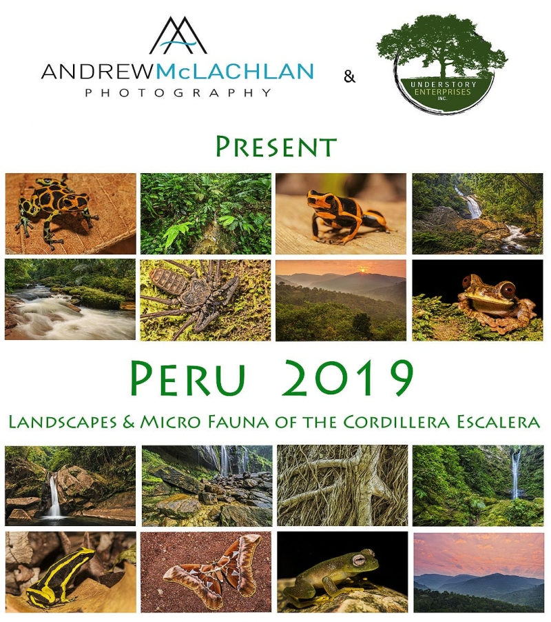 ANDMCL-this-one-Peru-2019-2