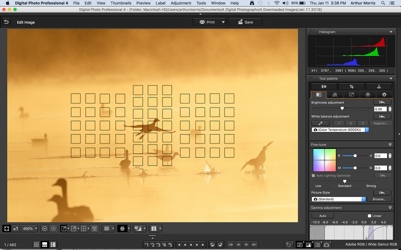 DPP-4-Fire-in-the-mist-coot-