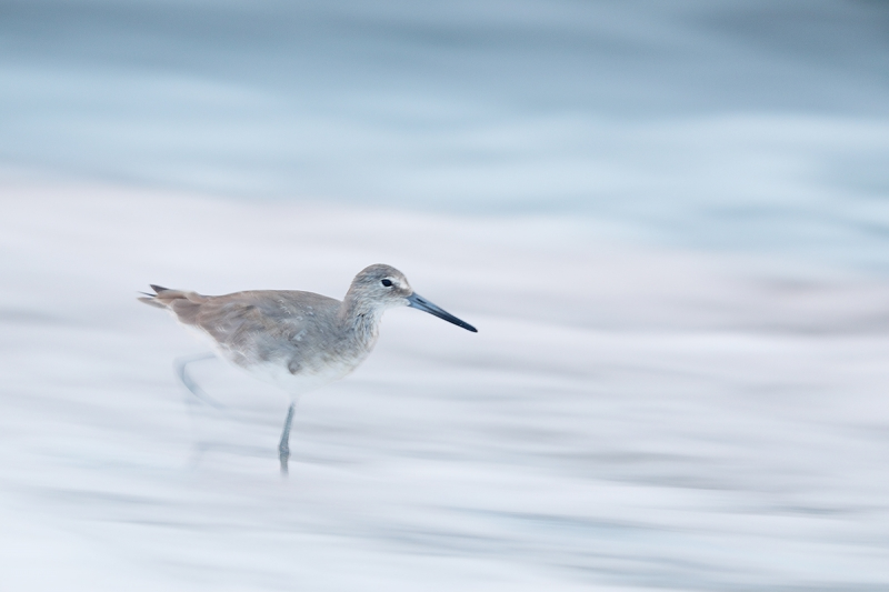 Willet-one-leg-blur-_W5A8888-Fort-DeSoto-Park,-FL