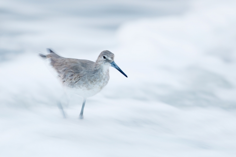 Willet-wave-blur-lighter-_W5A8883-Fort-DeSoto-Park,-FL