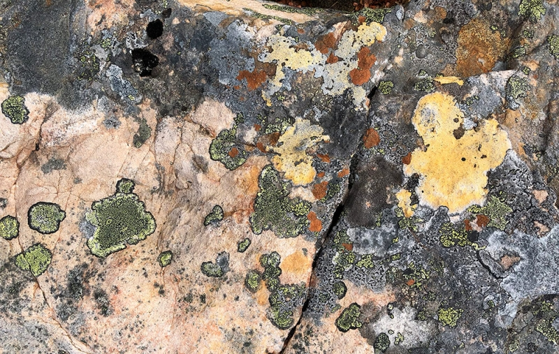 lichen-watercolor-IMG_0299