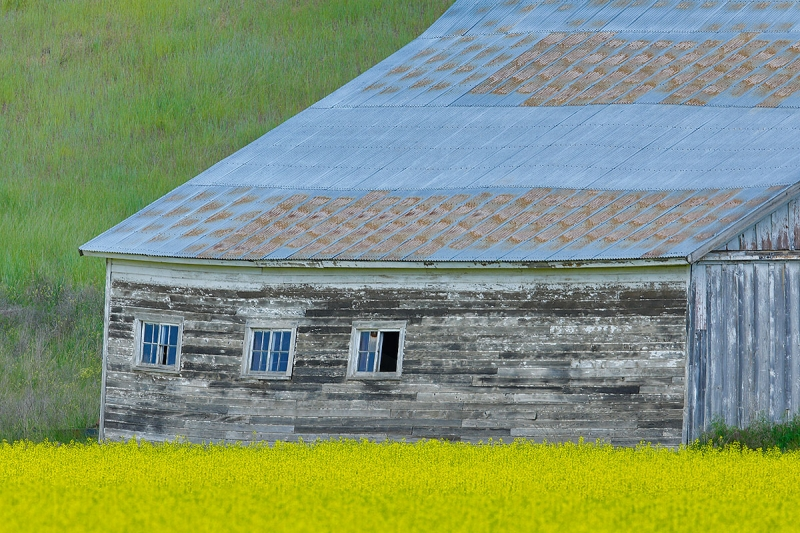 old-barn-in-canola-_P3A9777-Palouse,-WA