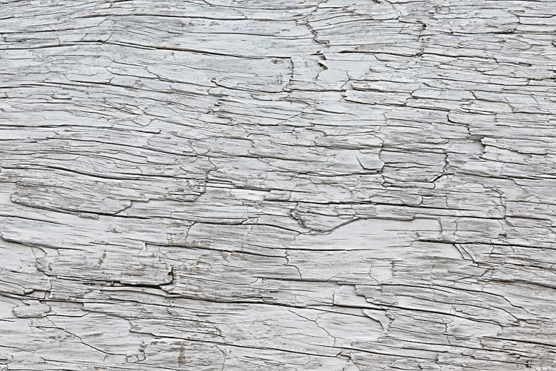 driftwood-pattern-art-embossed-_a1c0919-hallo-bay-katmai-national-park-ak