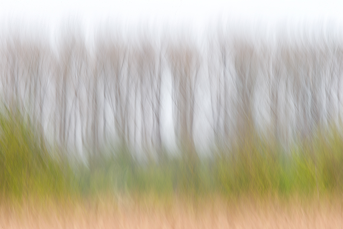 distant-trees-vertical-pan-blur-_y7o3943holland