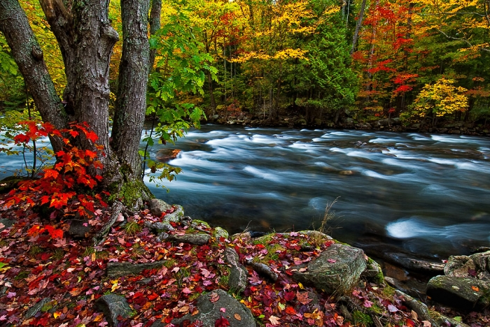 autumn-colour-on-kennisis-river-4795
