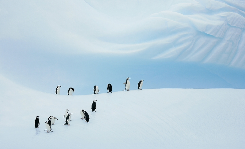 chinstrap-penguin-group-on-blue-iceberg-_b2e8650-coronation-island-south-orkney-islands_0