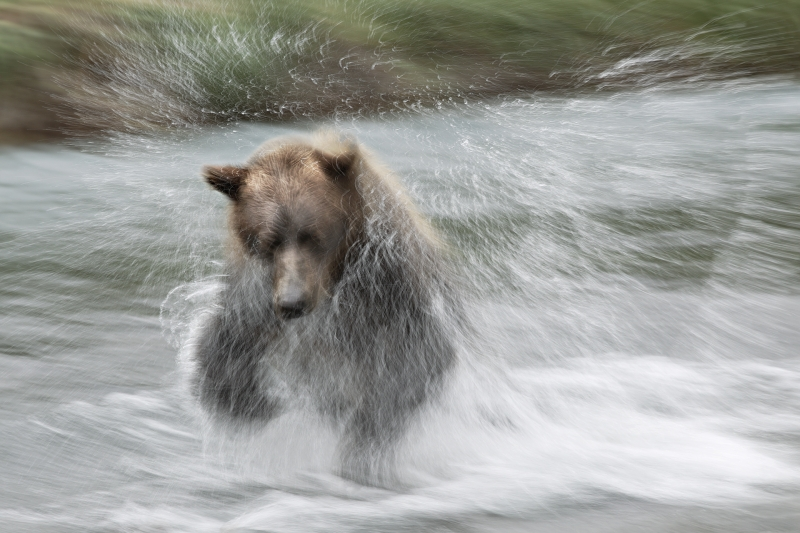 coastal-brown-bear-jumping-on-salmon-1-15-sec-_w3c0574-geographic-harbor-katmai-national-park-ak