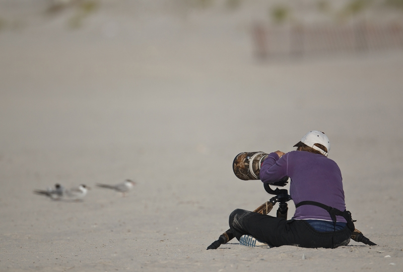 denise-photographing-terns-_w3c7362-nickerson-beach-long-island-ny