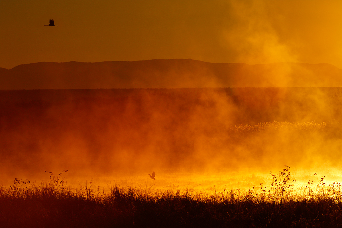 fire-in-the-mist-w-crane-and-duck-3y8a1536-bosque-del-apache-nwr-san-antonio-nm