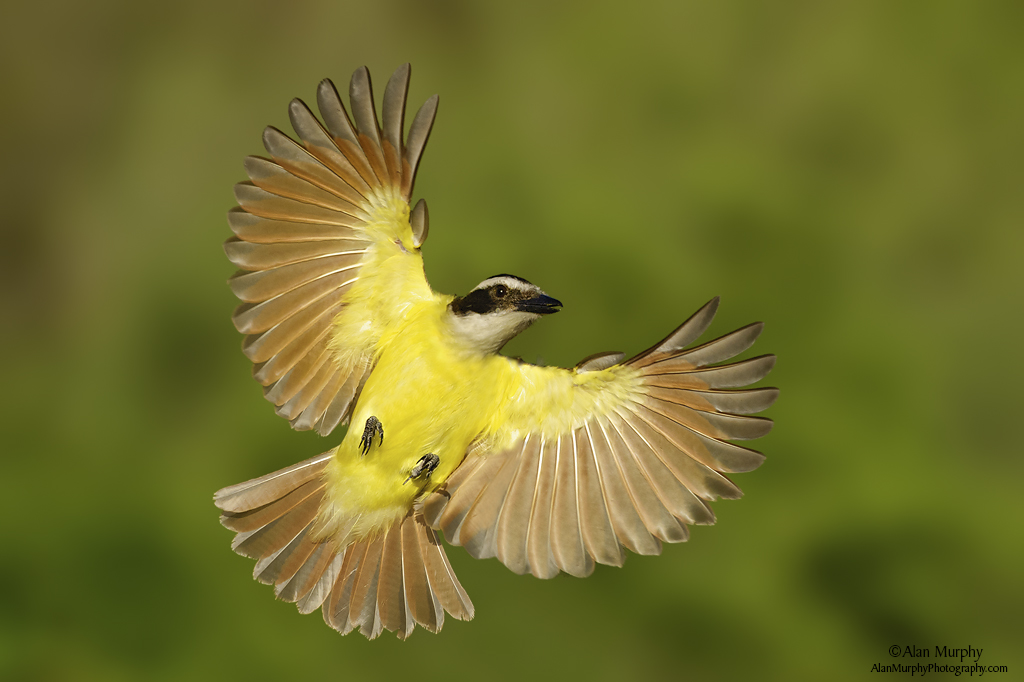 Colorful bird flying