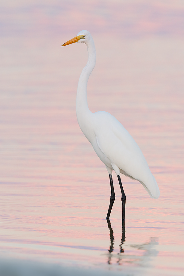 great-egret-iso-800-7-dii-_36a9460-fort-desoto-county-park-pinellas-fl