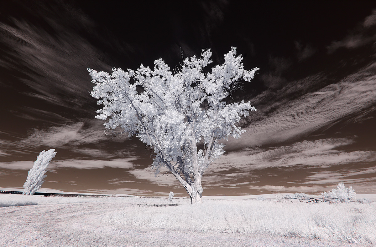infrared-tree-_mg_9396the-palouse-wa