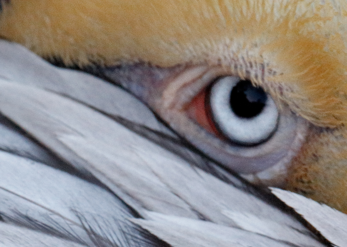 noise-detail-eye